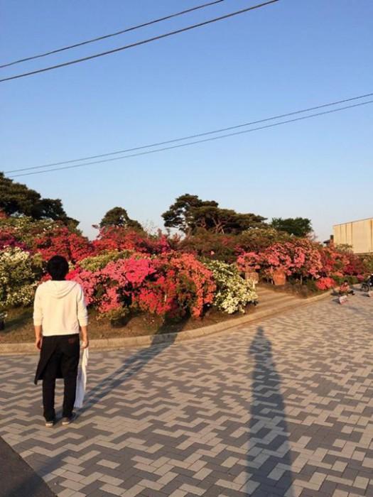 20150427朝つつじ