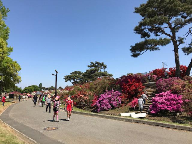 館林 つつじが岡公園(花山公園) 新公園のツツジ1