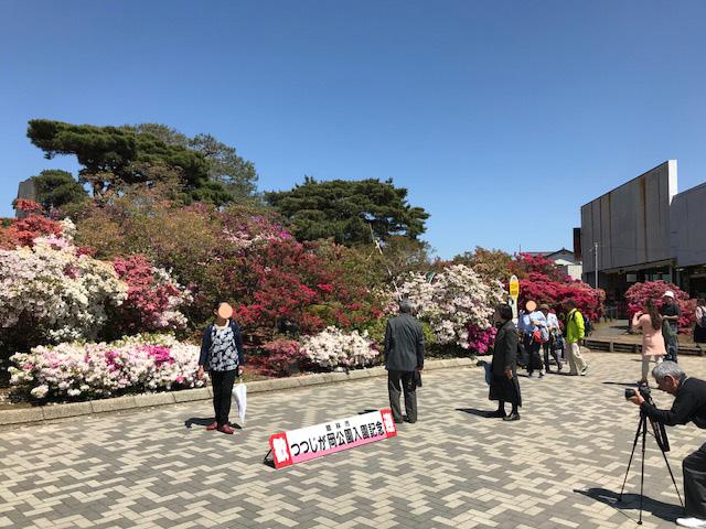 館林 つつじが岡公園(花山公園)のツツジ開花状況2018年4月28日
