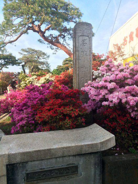 館林 つつじが岡公園(花山公園) ツツジと記念碑