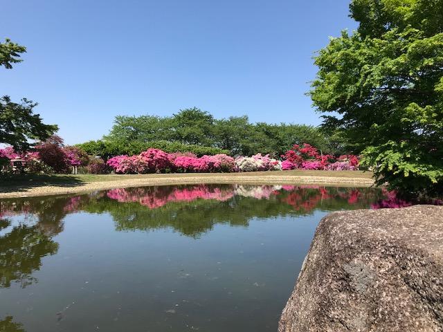 館林 つつじが岡公園(花山公園) 水面に映る逆さツツジ
