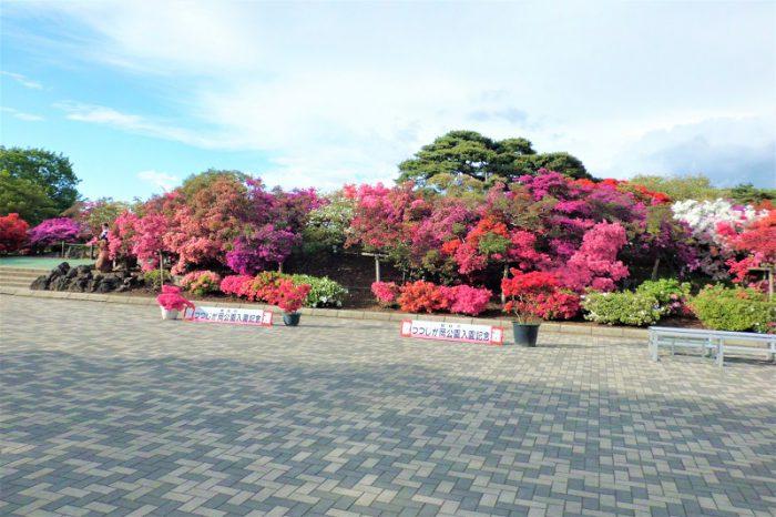 館林 つつじが岡公園(花山公園)のツツジ開花状況 2019年4月28日
