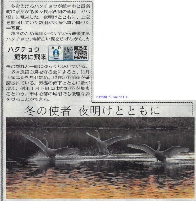 12/11付け上毛新聞 城沼に白鳥飛来