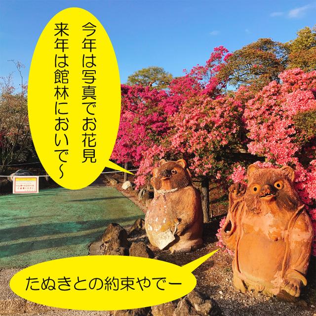 花山公園のたぬき