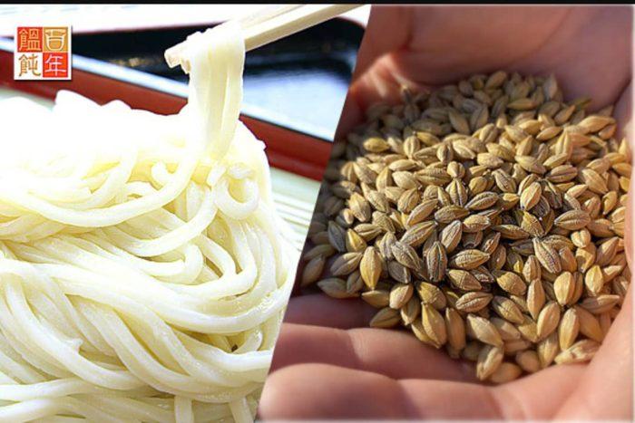 うどんと小麦(イメージ)