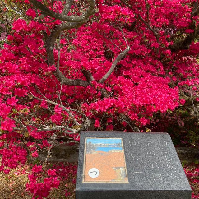 カルタ「つつじ咲く 花山公園 世界一」